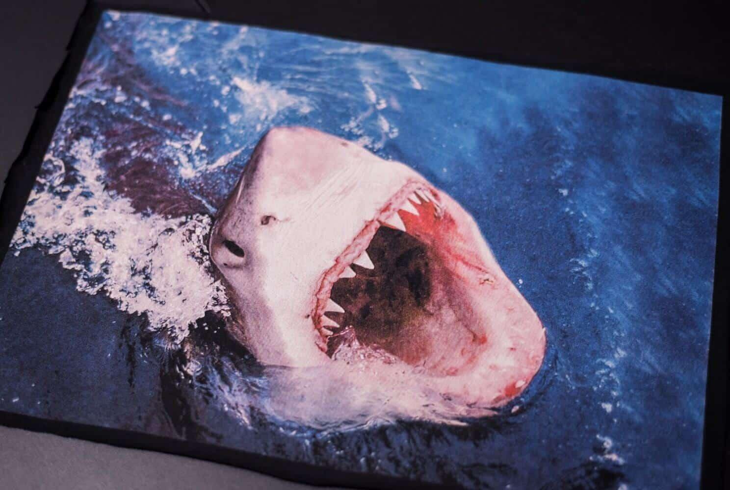 Nadruk rekina z otwartą paszczą
